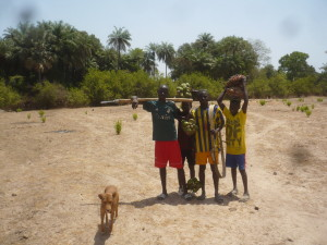 Oblast Casamance je bohatá na ovocné plody