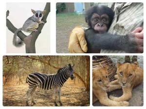 Ve volné přírodě v Senegalu můžete potkat celou škálu afrických zvířat